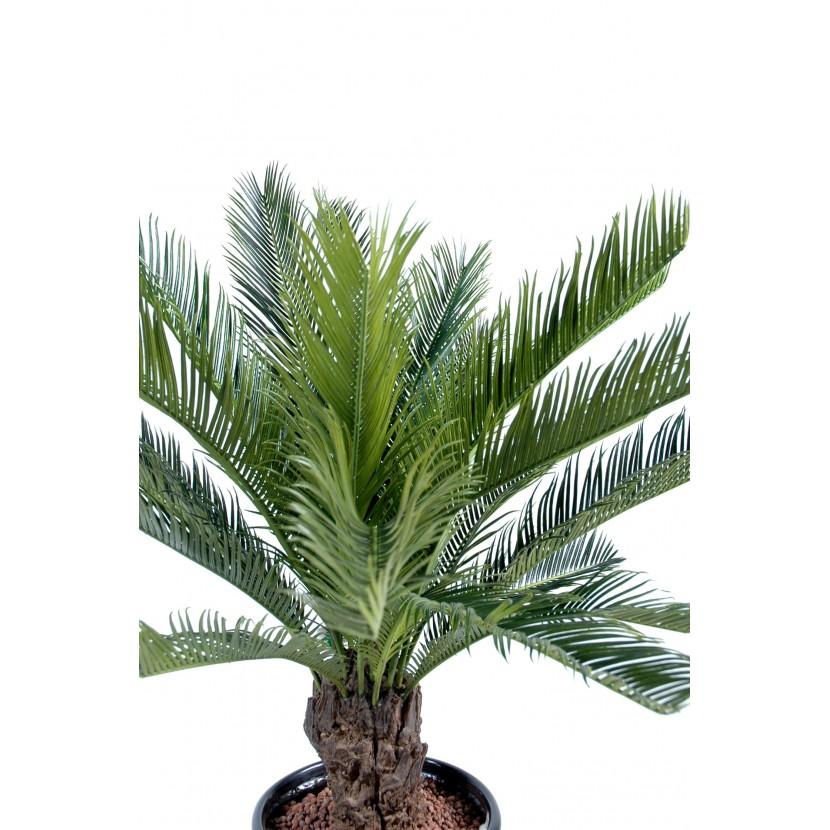 cycas tronc 90 cm 3