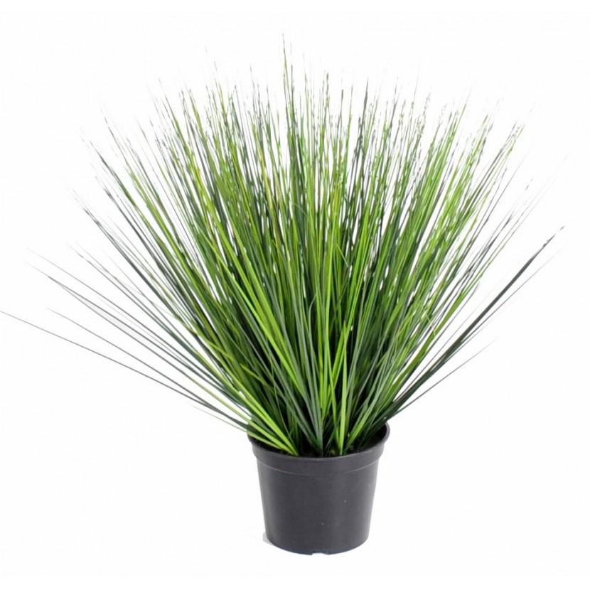 onion-grass-rond-60-cm