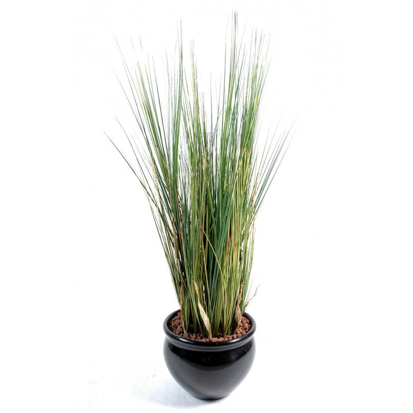 onion-grass125