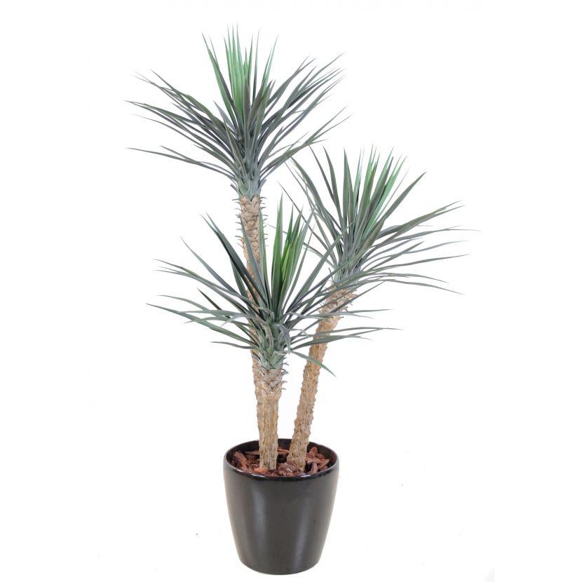 yucca rostrata 155-cm