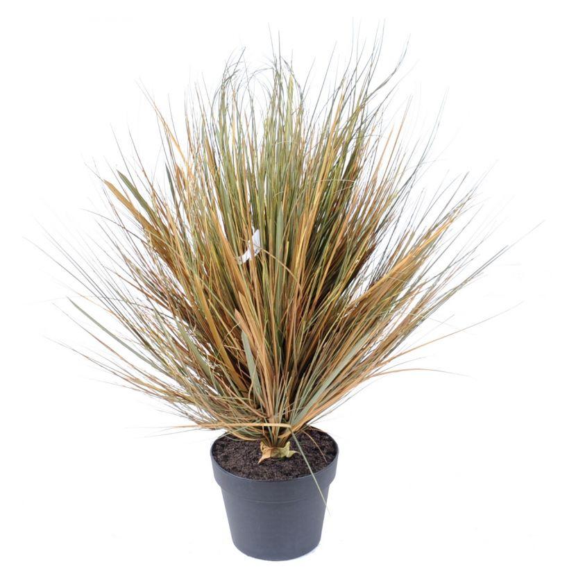 onion-grass-round-70-cm